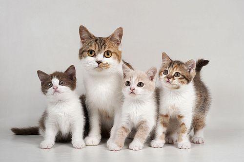 188 Koleksi Nama Terbaik Untuk Kucing Unik Dan Lucu