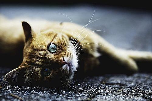 Nama Unik Untuk Kucing Beserta Arti Dan Deskripsinya